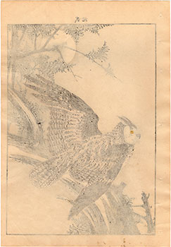 CYPRESS AND EAGLE OWL